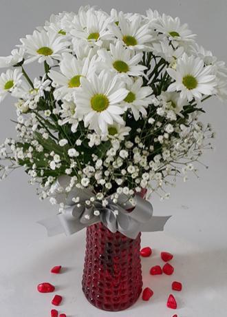 Alanya Çiçek Vazoda Papatyalar