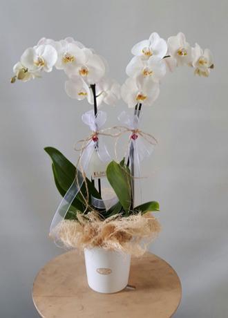 Alanya Çiçek Beyaz Orkide Farklı Ambalaj