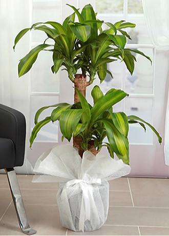 Alanya Çiçek Messangane 2 li