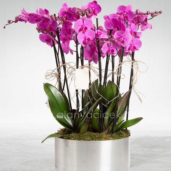 alanya Çiçek 6 Dal Mor Orkide