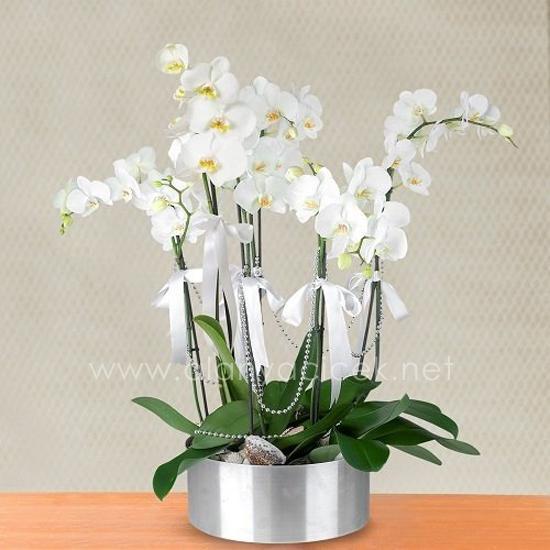 alanya Çiçek 6 Dal Beyaz Orkide