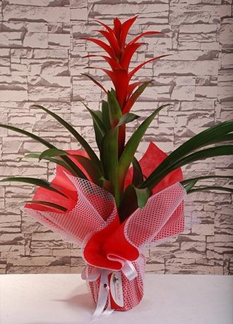 alanya Çiçek Guzmanya