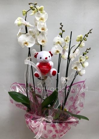 alanya Çiçek 5 Li Orkide ve Ayıcık