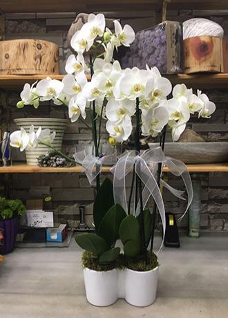 Alanya Çiçek Seramikte 4 Dal Orkide