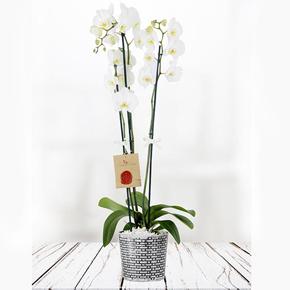 renkli kır Çiçekleri buketi Çiftli Orkide
