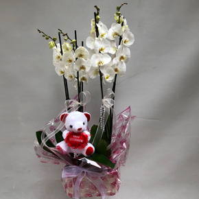 9 kırmızı gülden buket Ayıcık ve 5li Orkide