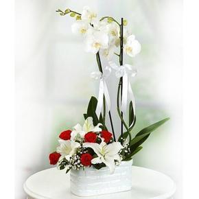 kalp vazoda 5 gül Seramikte Orkide Gül Lilyum