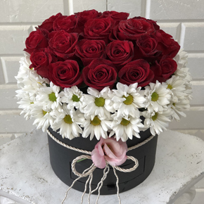 makaron ve güller 20 Gül ve Papatyalar